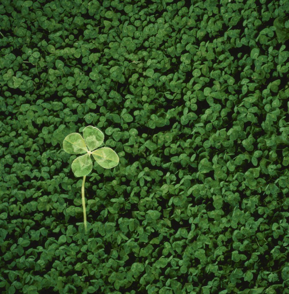 11 Juicy Facts About Lucky Four Leaf Clover