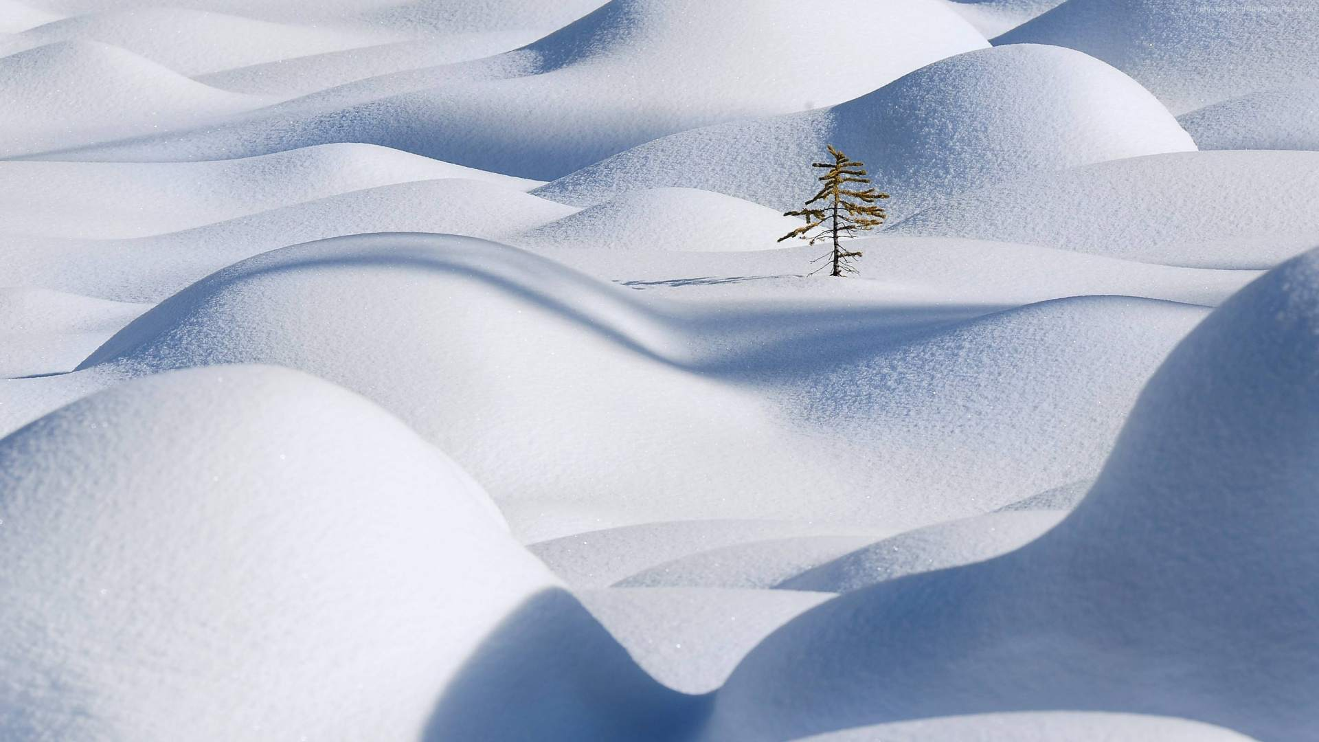 17 Beautiful and Free Winter Wallpapers