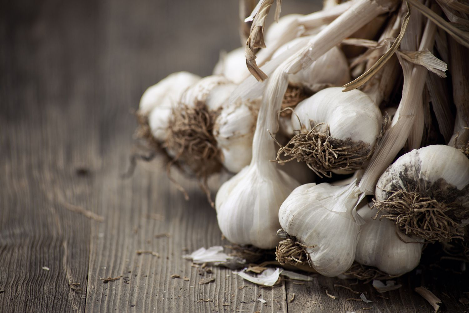 How to Cure or Dry Garlic to Preserve It for Later Use