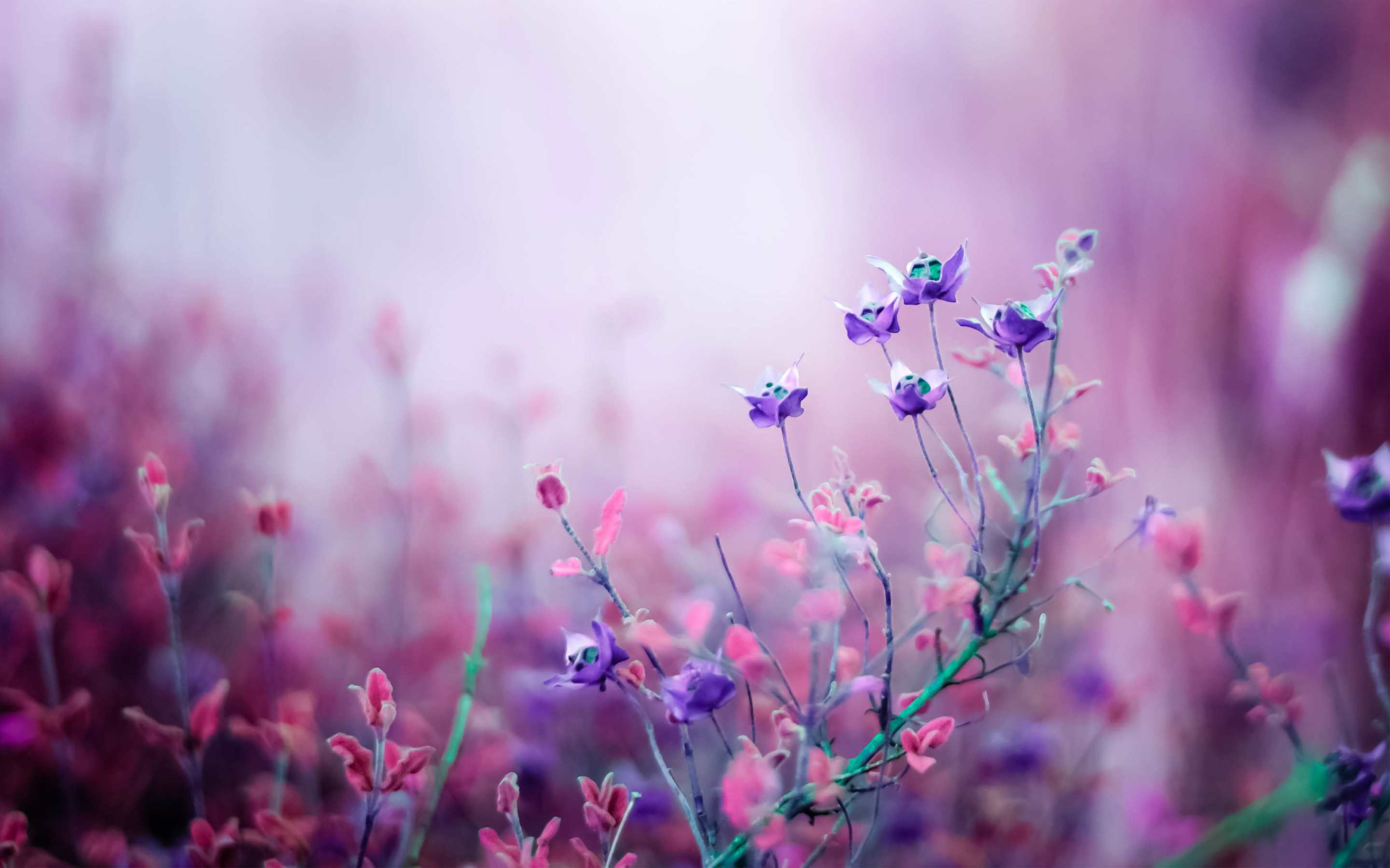 23 beautiful flower wallpapers
