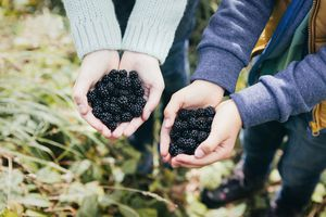 Two people holding blackberries in cupped hands