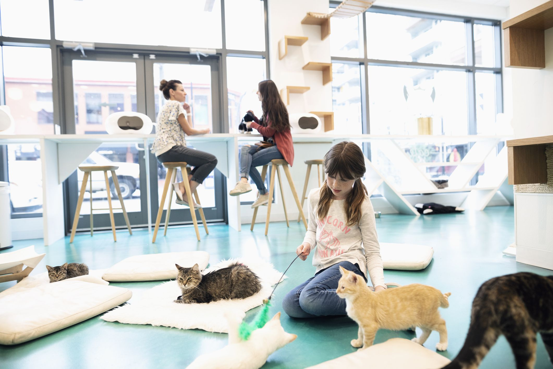 Tips On How To Start A Cat Cafe