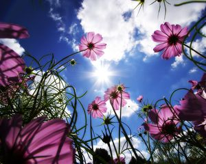 Sunny Flowers By EWallpapers