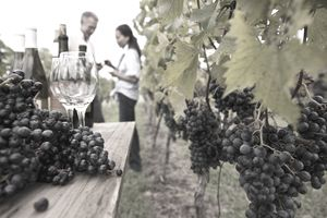 Image of a wine tasting at a Californian vineyard.