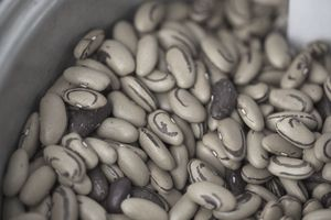 Dried Beans come in a variety of shapes, sizes, and tastes.