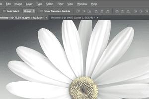 Screenshot of a flower in Adobe Photoshop