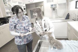 Veterinarian and nurse with kitten