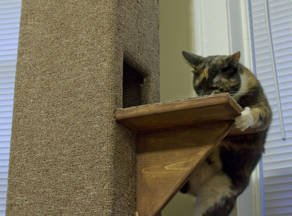 9 DIY Cat Tree Plans You Can Get for Free