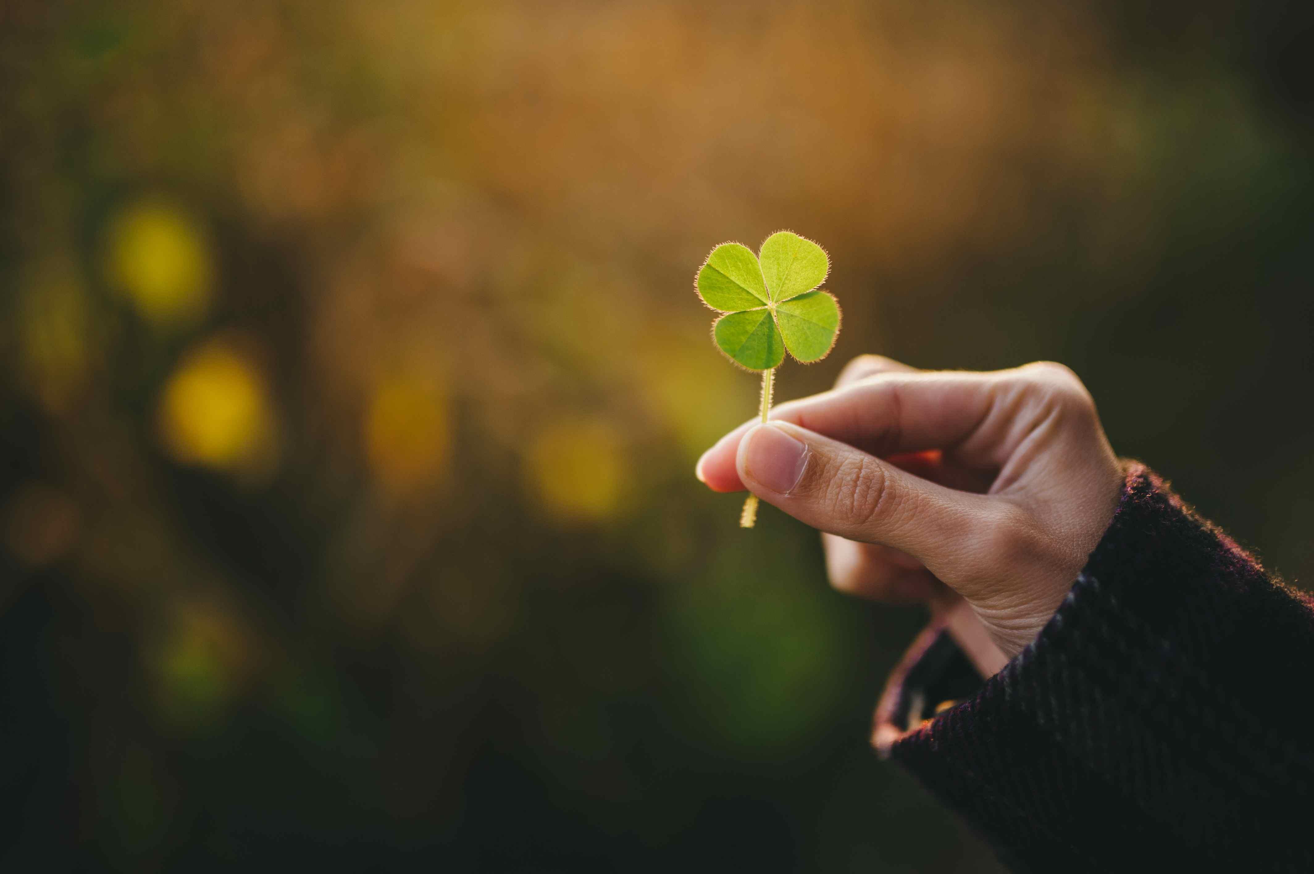 holding a four leaf clover a3df78ca6e403f2df