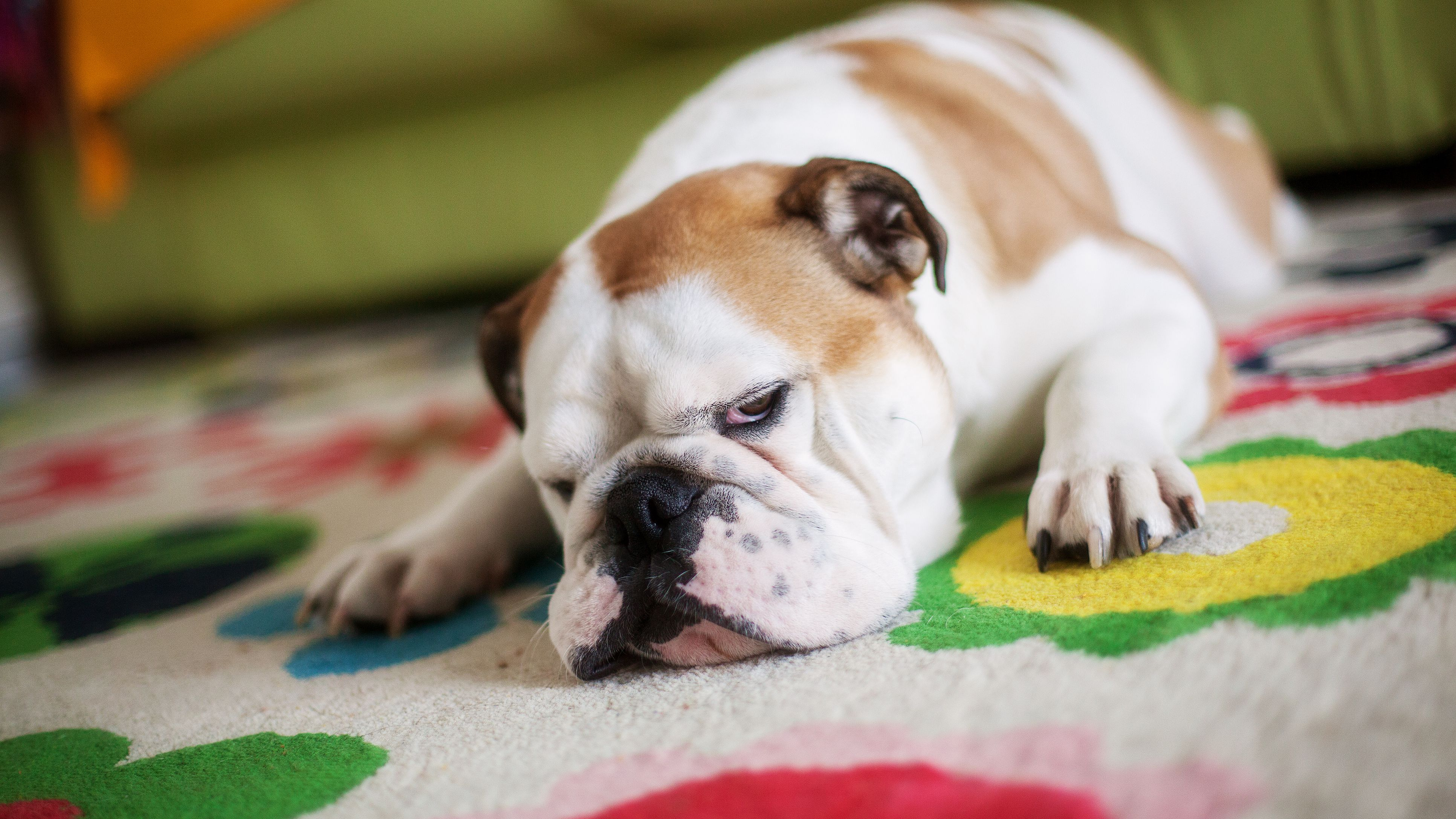 How To Freshen Carpets And Rugs With Baking Soda