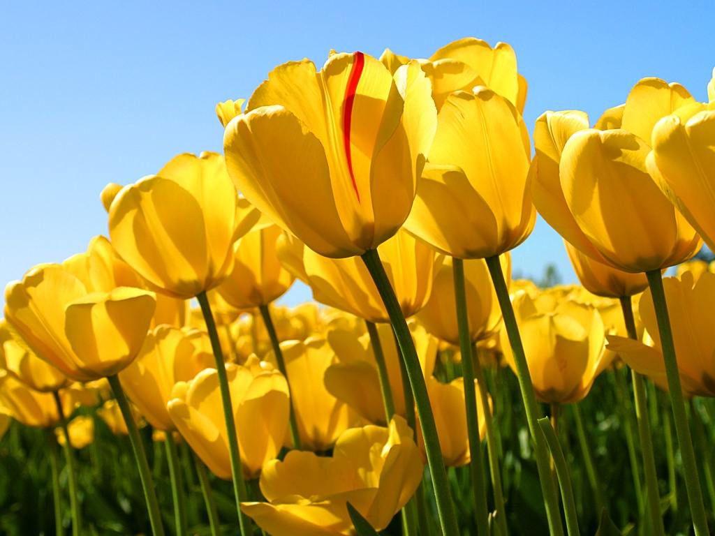 23 beautiful flower wallpapers